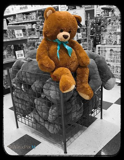 """""""Think outside the box"""". 11/120. Teddy Bear Outside The Box Toysrus Blue Ribbon Overflowing EyeEmNewHere Break The Mold"""