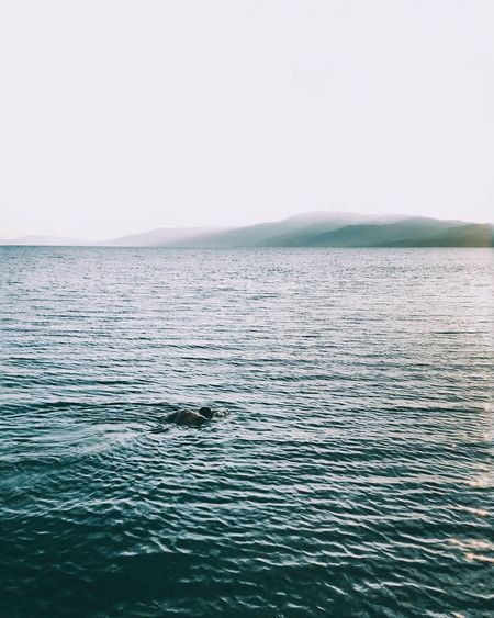Refreshing in the blues Sea Water Sky Scenics - Nature Beauty In Nature Nature Tranquil Scene Tranquility Horizon Over Water Seascape Horizon Clear Sky Blue Wave Moments Of Happiness