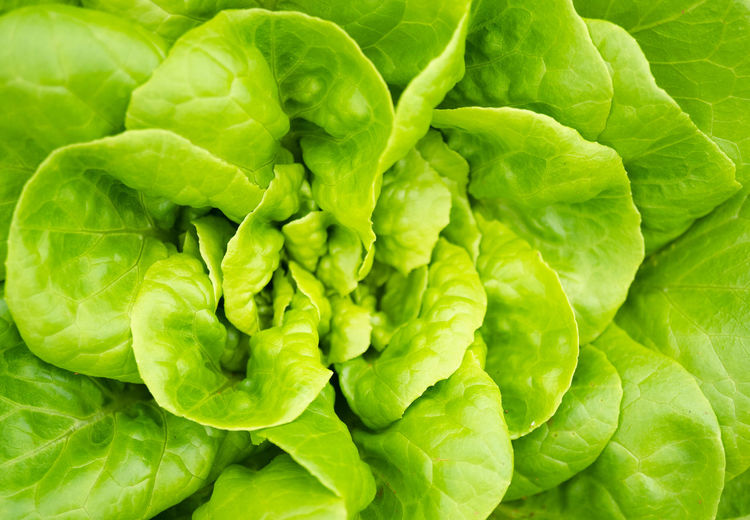 Agriculture Branch Foliage Food Fresh Freshness Garden Gardening Green Growth Healthy Herbal Leaf Nature Organic Plant Salad Vegetable