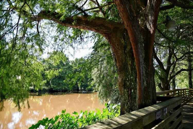 bayou side walk