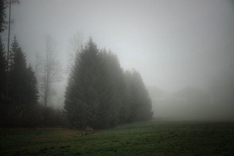 Nebel auf einer
