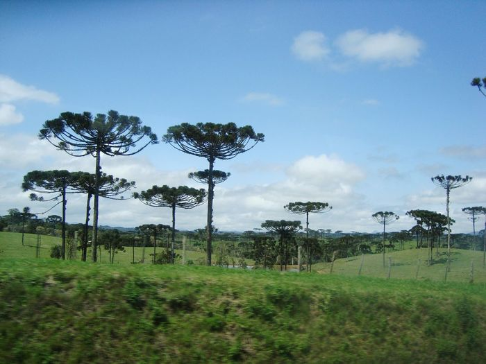 São José Dos Pinhais Tree Sky No People Outdoors Green Color Nature Cloud - Sky Day Rural Scene Beauty In Nature