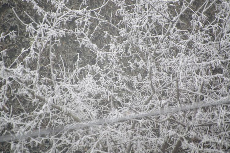 Day Frozen