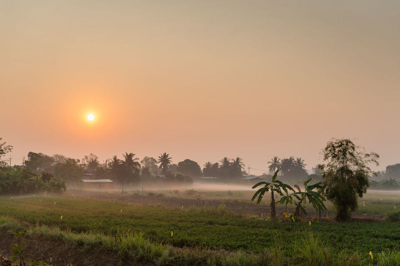 Sky Plant Tree Tranquil Scene Tranquility Scenics - Nature Beauty In Nature Landscape Sunset Sun Field Environment Land Nature Non-urban Scene Fog Rural Scene Orange Color Growth No People Outdoors