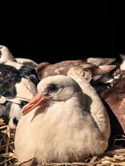D A W N Bird