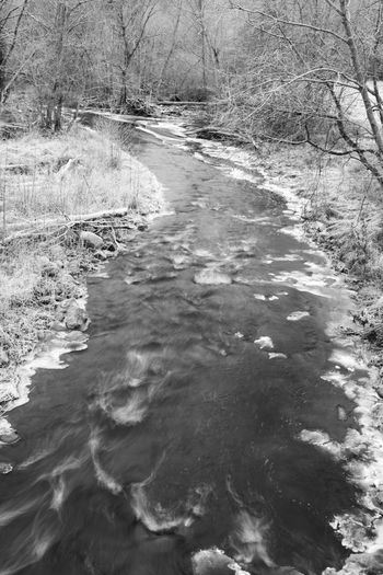 river and snow covered trees B&w, Branches, Grass, Ice, River, Snow, Stream, Tree, Trees, Winter Day Diminishing Perspective Grass Growth Idyllic Nature No People Non Urban Scene Non-urban Scene Outdoors Remote Rippled Scenics Stream The Way Forward Tranquil Scene Tranquility Travel Destinations Water