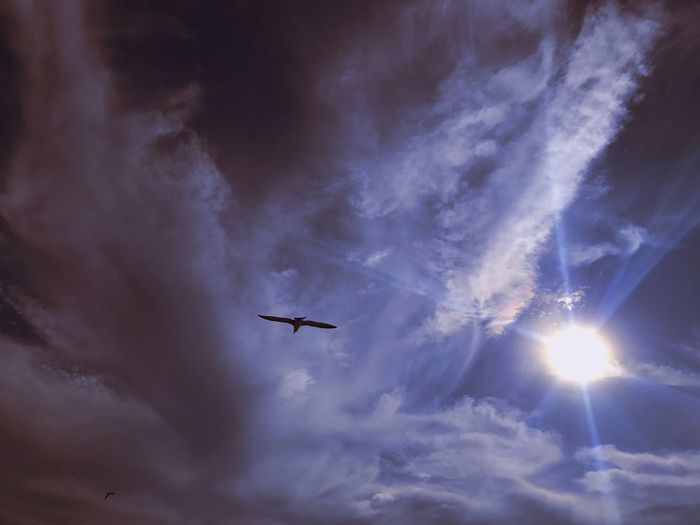 Darker Flying Low Angle View Sky No People Airplane Cloud - Sky Transportation Outdoors Day Nature Bird Birds Cloud Clouds Clouds And Sky Cloudy