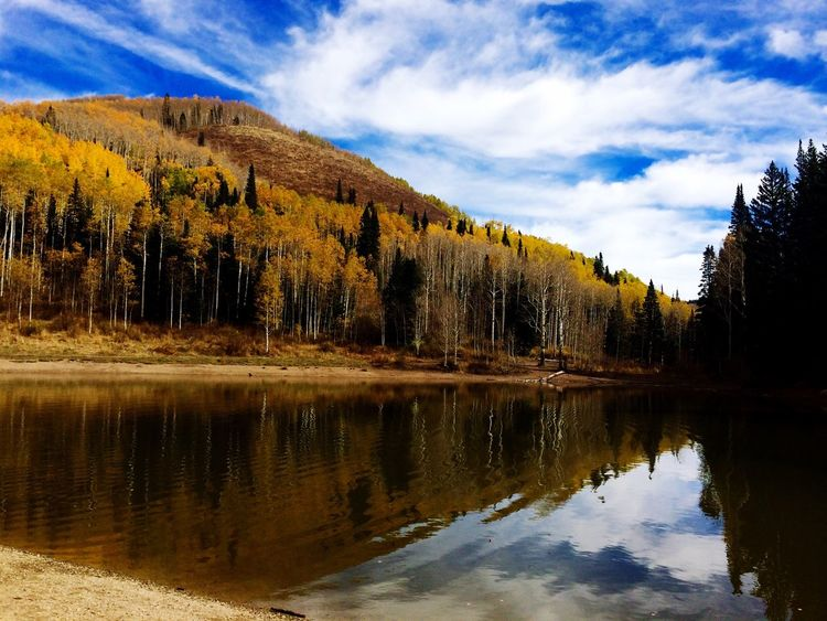 Millcreek canyon in fall Canyon Lake Season  Fall Fall Colors Fall Beauty Millcreekcanyon Aspens Tree Dogpark Endofthetrail Yellow Landscape IPhoneography Landscape #Nature #photography Utah Saltlakecity United States