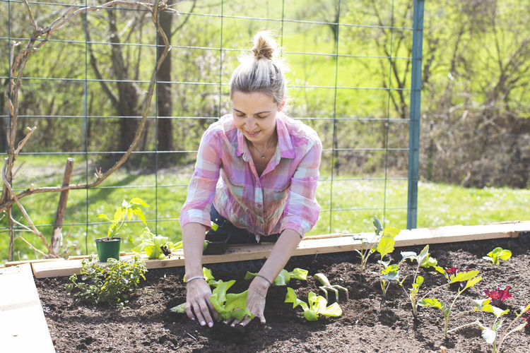 Young, pretty blond woman is planting vegetables in the garden in the raised bed and is happy Plant Woman Adult Agriculture Blond Hair Care Casual Clothing Day Dirt Food Front View Full Length Gardening Growth Hair Hairstyle Healthy Eating Hobby Leisure Activity Lifestyles Nature One Person Organic Outdoors Plant Planting Real People Vegetable Vegetable Garden Women
