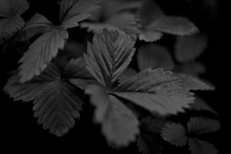 No Color Beauty In Nature Blur Close-up Leaf Macro Nature No People Petal Plant