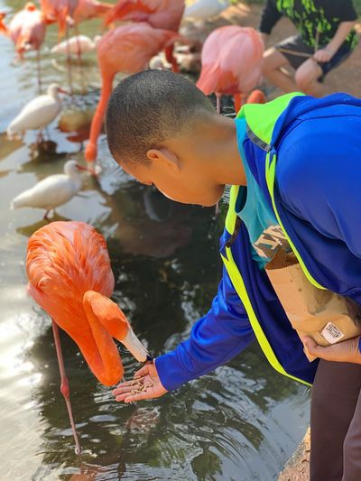 Flamingo Water Real People Leisure Activity Nature Swimming Lifestyles Child Day One Person Animals In The Wild Fish Outdoors Animal Wildlife Sea