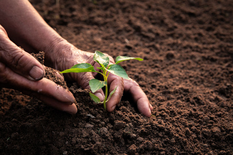 Human Hand Growth Nature Plant Gardening Outdoors Hand Planting Beginnings Agriculture Leaf Vegetable Care
