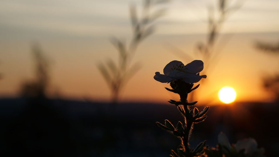 16:9 Beauty In Nature Close-up Day Flower Nature No People One Animal Outdoors Silhouette Sky Sunset