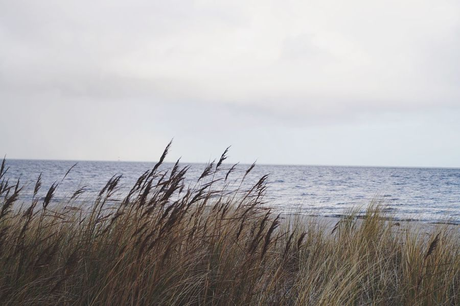 Beach Beachphotography Nordsee Dünen Horizon Over Water Sea Tranquility Nature Water Beauty In Nature Grass No People Tranquil Scene Walking Around Lighthouse Travel Photography Ocean Nature Naturephotography Outdoors Beauty In Nature Moments Of Life Marram Grass Timothy Grass Day Breathing Space Breathing Space Mix Yourself A Good Time The Great Outdoors - 2018 EyeEm Awards