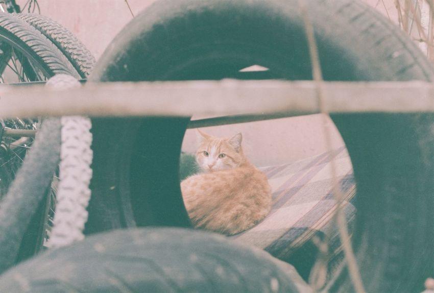 Kedi Kitten Cut Pets Animals Cute Cats CanonA-1 Bugununkaresi Canonphotography Benimgözümden Vscoturkey