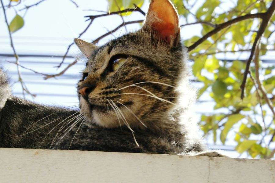 Gato Arbol. Mirada  Canon Sin Filtros