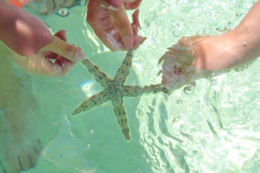 Start Startfish Ocean Sea Malaysia