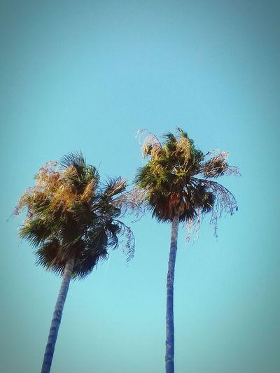 Peace ✌ Palm Tree Love