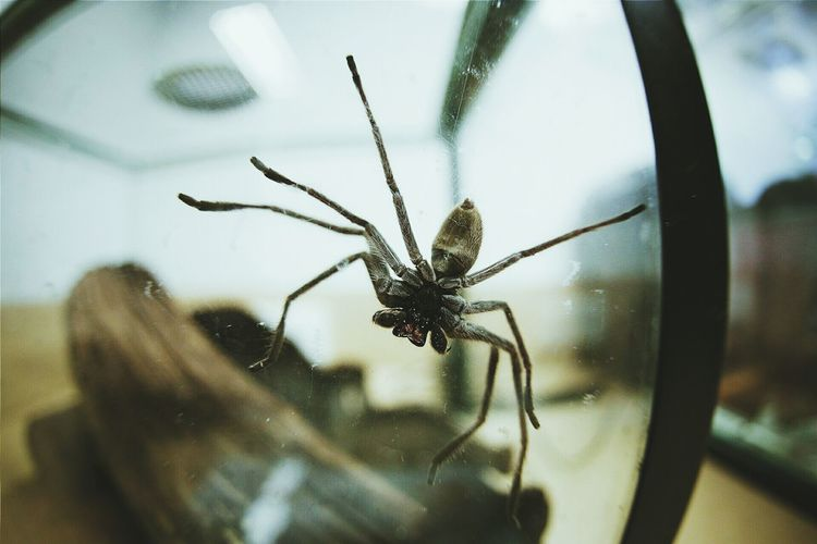 Close-up of spider on magnifying glass