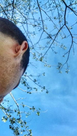 Blue Close-up Tree Sky Nature Mammal Animal Themes No People Day Outdoors Face Mylove Kennedy Town Kennedypark Honduras ♥ VivaHonduras Tegucigalpa,Honduras Tranquility Freshness Catracha Honduras PowerShot SX60HS Only Men Sportsman Tree