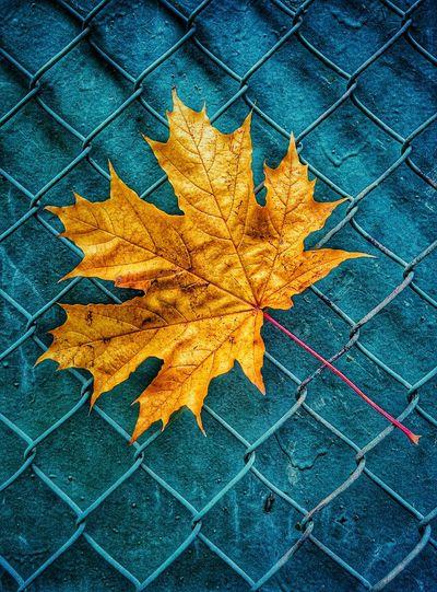 Осень 🍁🍂 дожди☔