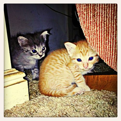 Kittens Up For Adoption Taking Photos