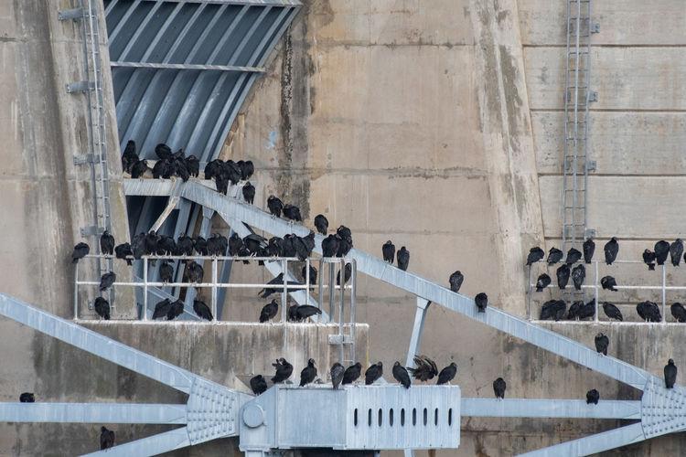 People on bridge