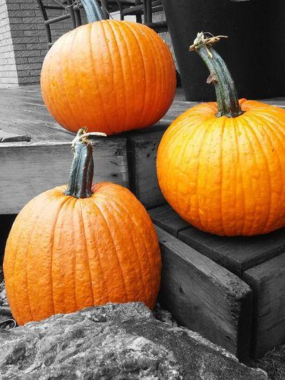 Yay pumpkins!!! Pumpkin Orange Color Autumn Squash - Vegetable Gourd Halloween Picturejunkie Eyemnaturelover Fall Beauty Fall Collection Nofilternoedit No People Nature Vegetable