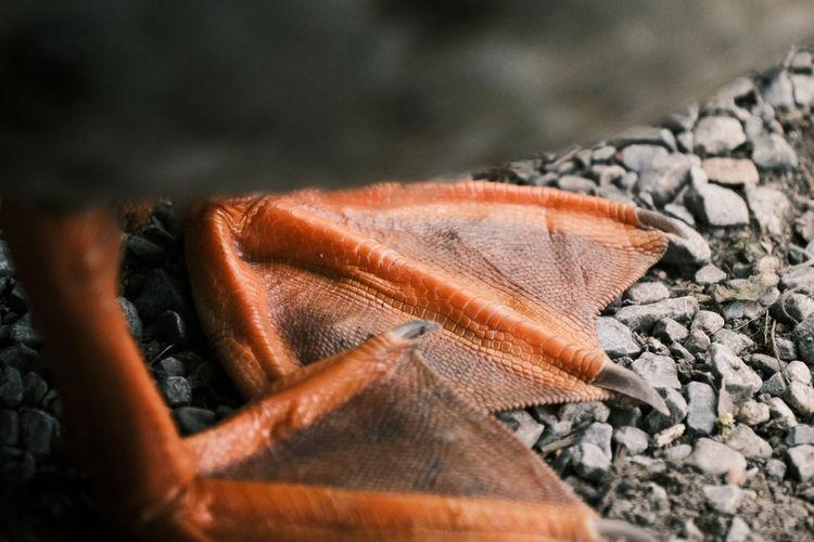 High angle view of fish on wood