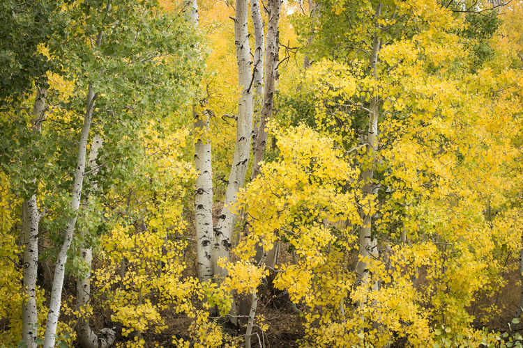 Yellow flower trees in forest during autumn