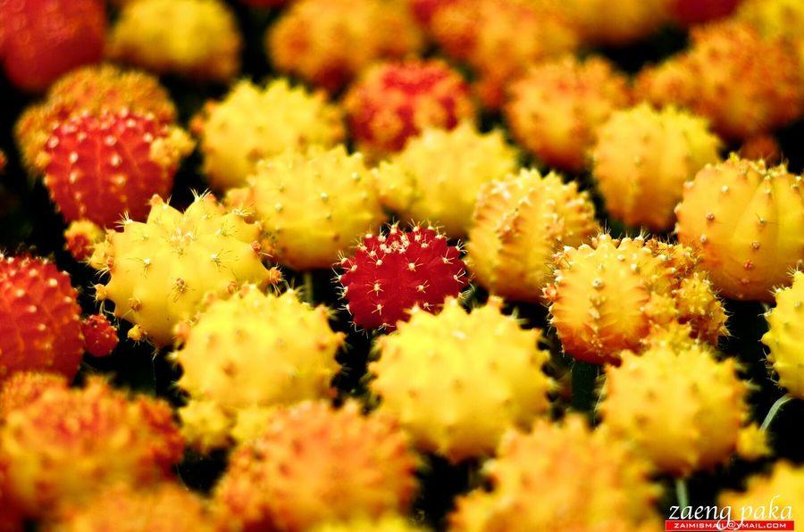 Cactus I Love Cactus <3 Cactus