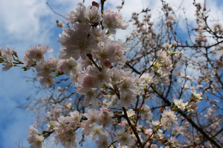 Flowers Blossom Trees