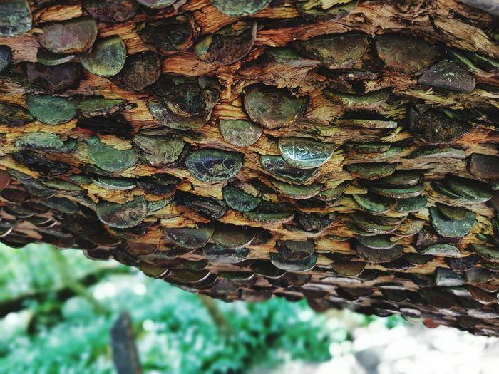 Money Tree Ingleton Falls Nature_collection