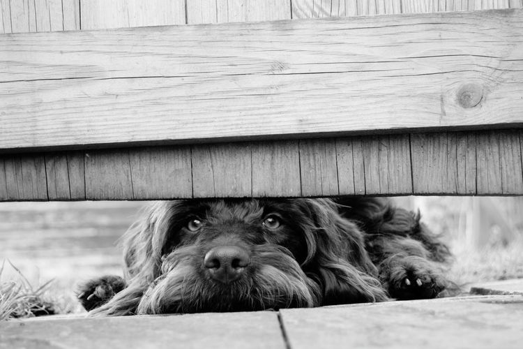 Portrait of dog relaxing on wood