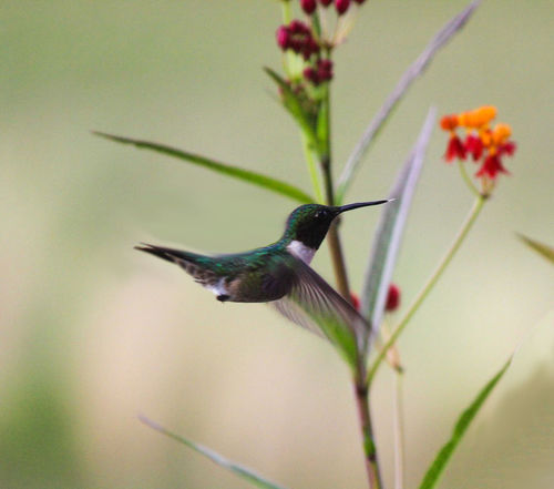 Humming bird, my favorite , backyard flowers, little tounge, Check This Out Hello World Relaxing Taking Photos Enjoying Life EyeEm Nature Lover Beautiful Nature Bluffton Sc, One Of My Favorite Things Birds_collection EyeEm Birds Bird Photography