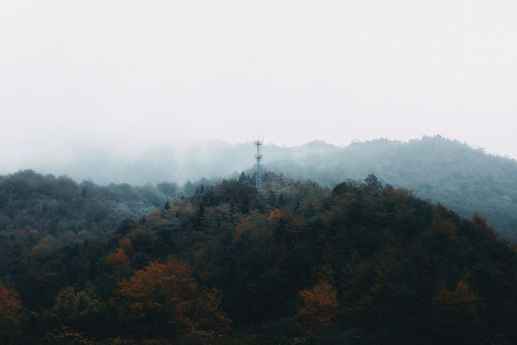 Surreal Fall Edition 08 Surrealism Tree Fog Nature Foggy Tranquility Beauty In Nature EyeEm Ready   Tranquil Scene Autumn Mist Scenics Mountain Forest Hazy  No People Day Outdoors Sky Landscape Growth EyeEmNewHere