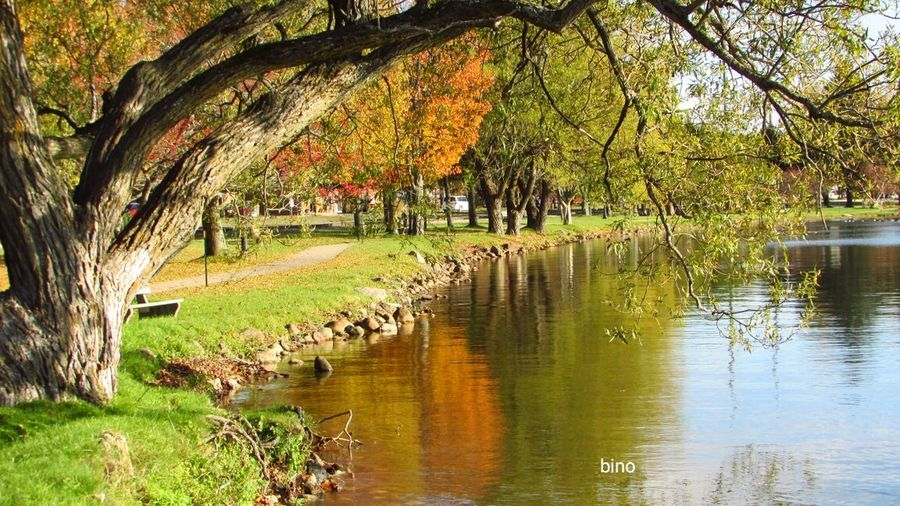 Afternòon Shoot At The Lake Autumn🍁🍁🍁 Along The Shore Reflection_collection Color Pops! Tranquil Scene Lake Cadillac Pure Michigan