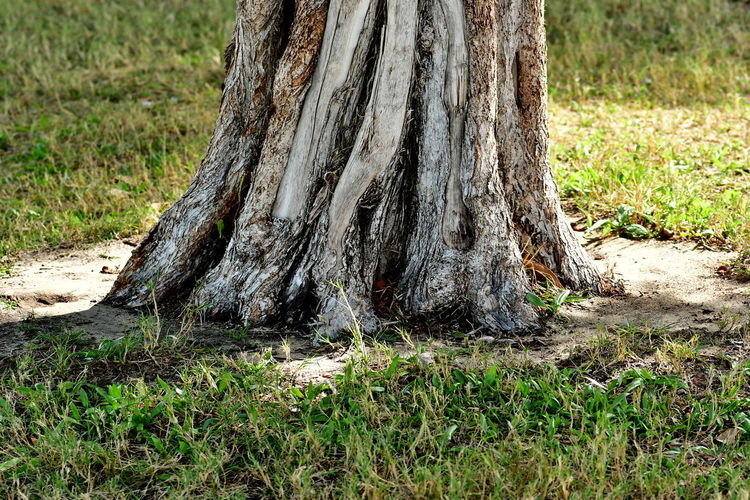 tree trucks on grass Grass Nature Collection Nature Photography Nature's Diversities Tree Tree Trunk Trees Beauty In Nature Day Grass Grass Area Growth Nature Nature_collection Nature_perfection Naturephotography No People Outdoors Tree Tree And Grass Tree Area Tree Trunk Tree_collection  Trees And Nature