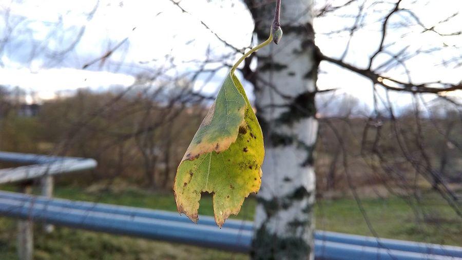 just a leaf ..