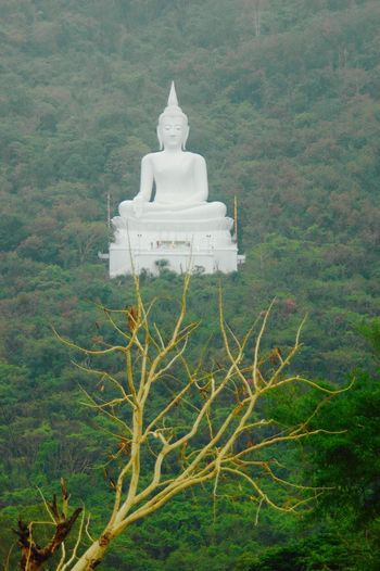 Osmose entre l'Homme et la Nature. Taking Photos Relaxing Hello World Taking Pictures Taking Photo Nature Nature_collection Eyembestpics EyeEm Best Shots Eye4photography  Religion Buddha Buddhism Buddhist Temple Igers Thailand Thailand_allshots Temple - Building Thepatan Spotted In Thailand