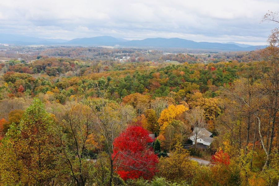 Autumn Splendor in the Blue Ridge Mountains Autumn colors Beauty In Nature Plant Mountain Sky Nature Flower Growth No People Day Scenics - Nature Landscape Cloud - Sky Environment Tranquility High Angle View Mountain Range Outdoors Tranquil Scene Multi Colored