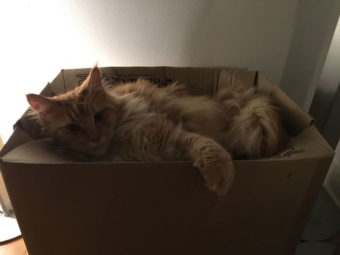 Box Animal Animal Themes Backlight And Shadows Cat Cat On A Box Domestic Domestic Animals Domestic Cat Feline Indoors  Lying Down Mammal No People One Animal Pets Relaxation Resting Vertebrate