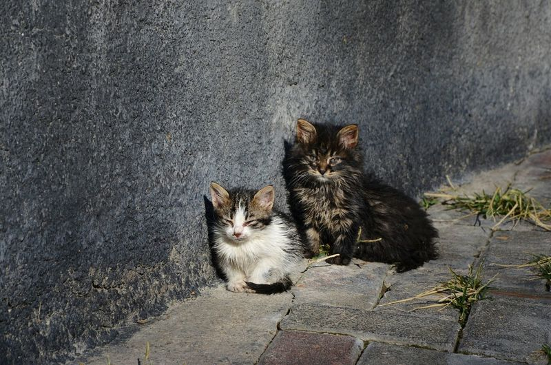 Cats sitting on footpath