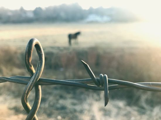 Barbed. Colorado Horse Metal Focus On Foreground Protection No People Barbed Wire Day Outdoors Close-up Sky Nature
