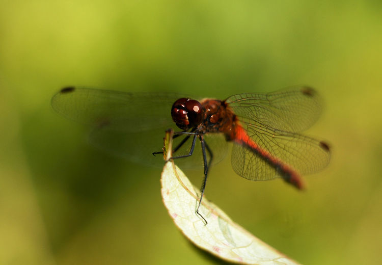Beauty In Nature Close-up Dragonfly Insect Macro Nature Selective Focus Wildlife
