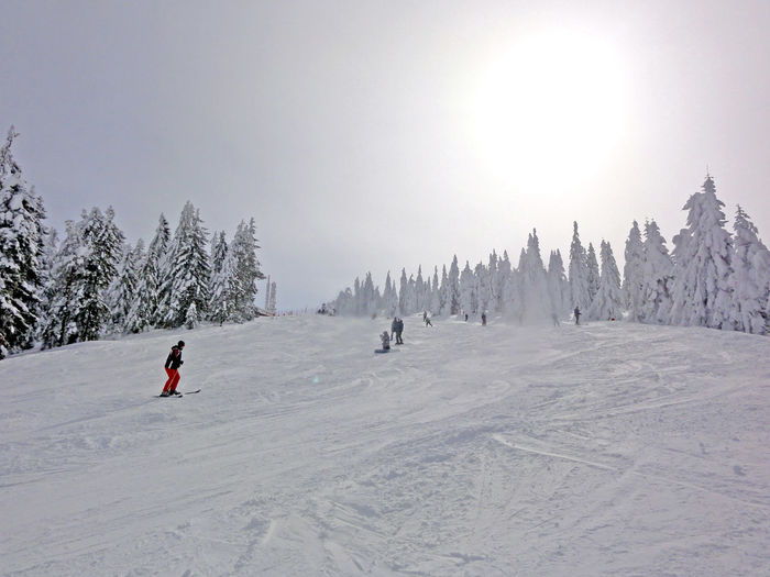 Skiing on perfect winter day Cold Cold Temperature Day Leisure Activity Nature Outdoors Ski Holiday Skiing Snow Travel Travel Destinations Weather Winter Zlatibor