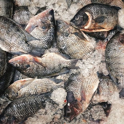 Textured  Backgrounds Pattern Sale Fish Brazilian Fish Fish In Ice Market Fish Sale Abstract Fishes Fish Market Textured Effect