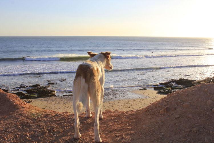 Dog looking at sea