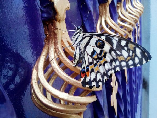 Home Is Where The Art Is Butterfly Butterfly On Gate Gate Popular Mobile Photography Different Perspective Colourfull Metal Structure Gold Colored Lime Butterfly Adapted To The City