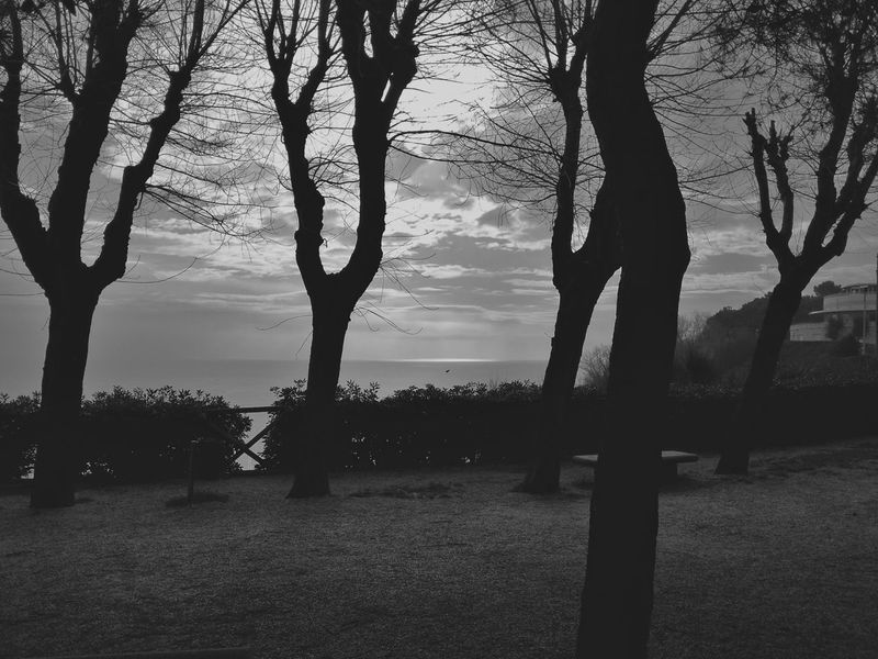Sky And Trees Silhouettes Blackandwhite